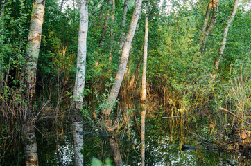 forest trees in flood water and evening sunset