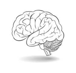 Human brain with shadow. A side view. Vector
