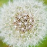 Fluffy Frame - 64911745