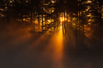 Sunbeams through the forest at sunrise