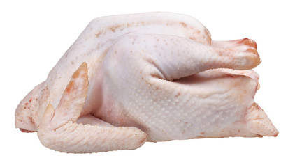 raw plucked fowl chicken isolated