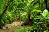 Fototapety Darien jungle