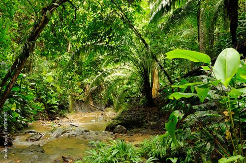 Foto op Plexiglas Landschappen Darien jungle
