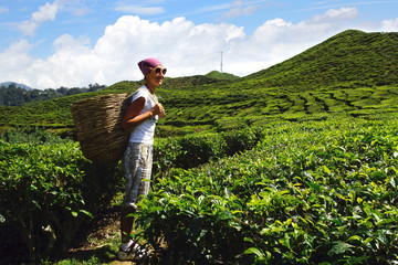 Tourist with a basket on a tea plantation.