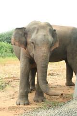 Elefantenbulle Hochformat