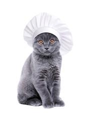 british cat wearing chef hat