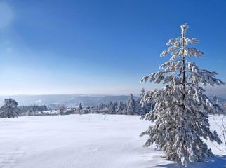 Schwarzwaldtanne im Schnee