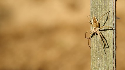 Ant came across the spider and goes away