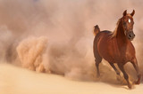 Arabian horse running out of the Desert Storm - 64922558