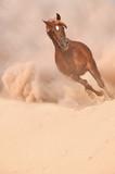 Arabian horse running out of the Desert Storm - 64922560