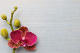 Orchid background.