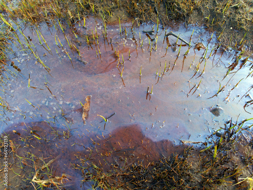 puddle of oil - 64923139