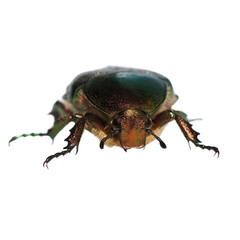 green beetle on white background