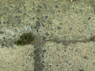 Textura de piedra, cemento, con vegetación