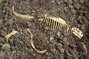 Tyrannosaurus Rex Bones
