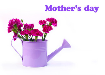 pink bouquet in watering can, isolated on white, greeting card
