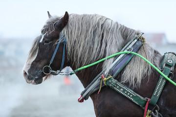ばんえいの馬