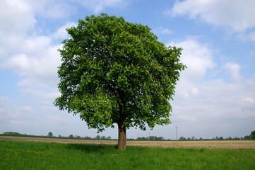 Samotne drzewo.