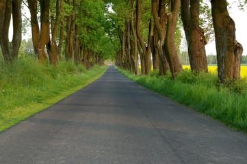 Wiejska droga.