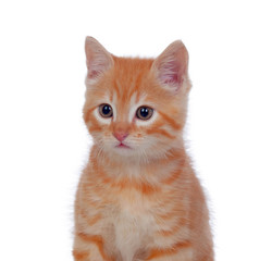 Beautiful red-haired kitten
