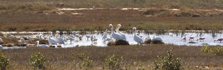 Wetlands Bird Sanctuary