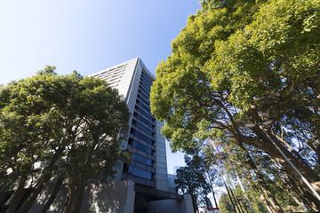警視庁(建物と樹々)