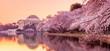 Leinwanddruck Bild - the Jefferson Memorial during the Cherry Blossom Festival