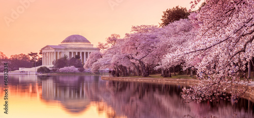 Fotobehang Historisch mon. the Jefferson Memorial during the Cherry Blossom Festival