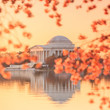the Jefferson Memorial during the Cherry Blossom Festival