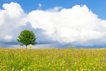 Natural meadow with little tree