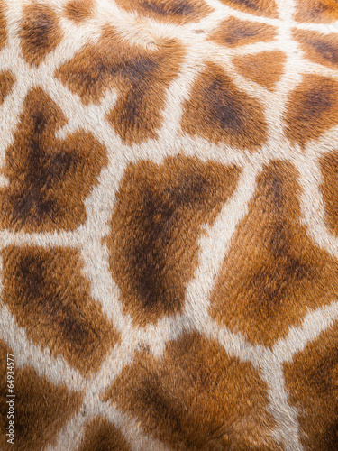 Plexiglas Giraffe Genuine leather skin of giraffe