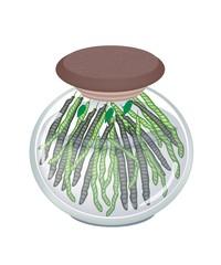A Glass Jar of Mung Bean Pods