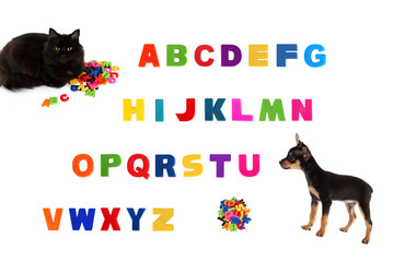 Alphabet, black cat, toy-terrier puppy on white background.