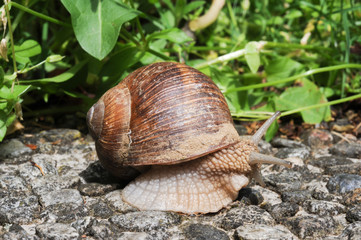 Snail with his shell