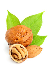 Walnuts and almond with leaves.
