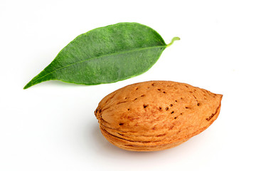 Almond and leaf.