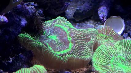 Sea anemone.