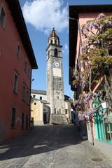 Glycines près de l'église, san pietro e paolo.