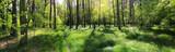 poranna leśna panorama