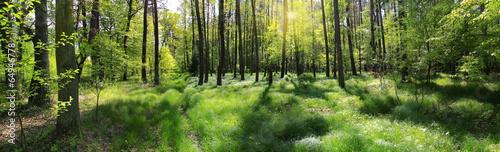 poranna leśna panorama - 64946778