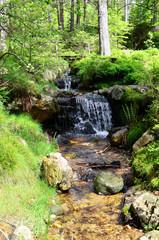 Wald  Bach Pflanzen