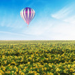Balloon over Yellow Flower Field