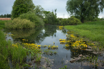 Landscape with a river and yellow flowers, Bogolubovo, Russia