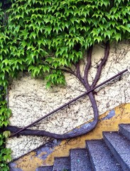 Tree on a wall
