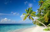 Fototapety Strand mit Palmen