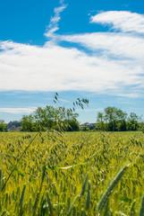 Paesaggio di campagna, campo di grano, estate