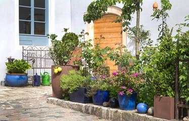 Sommeranfang: Kübelpflanzen und Topfpflanzen