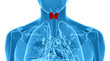 Постер, плакат: x ray illustration of the male thyroid gland
