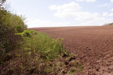 harrowed field with bracken