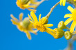yellow flower on a blue background